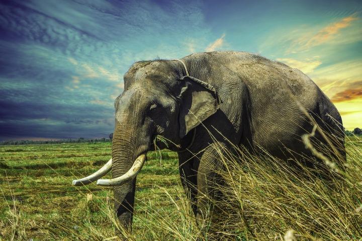 Perché le grandi specie animali sono quelle più arischio?