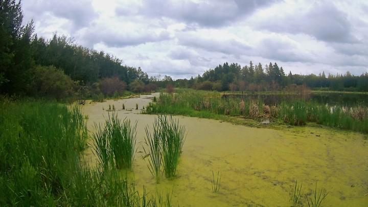 Eutrofizzazione: perché a volte mari e laghi si riempiono dialghe?