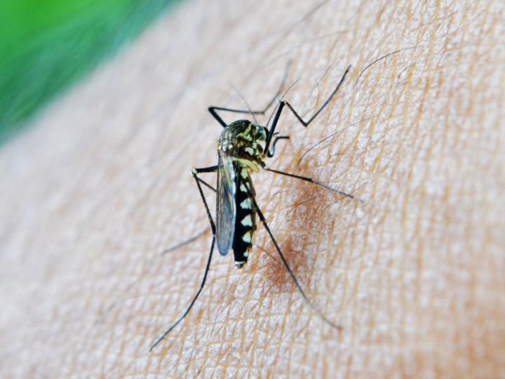 Malaria: i casi nel mondo sonopreoccupanti